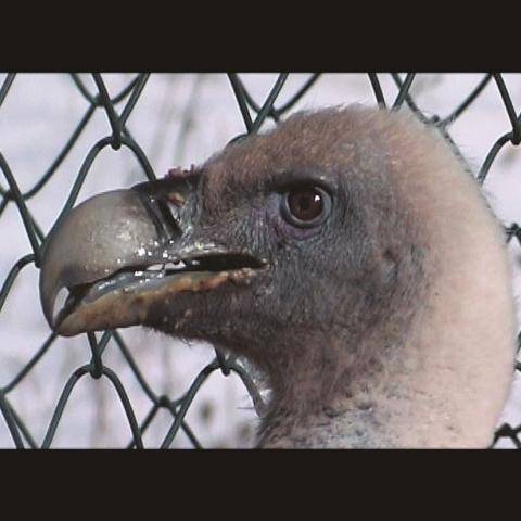 Il ritorno degli avvoltoi - FFDL