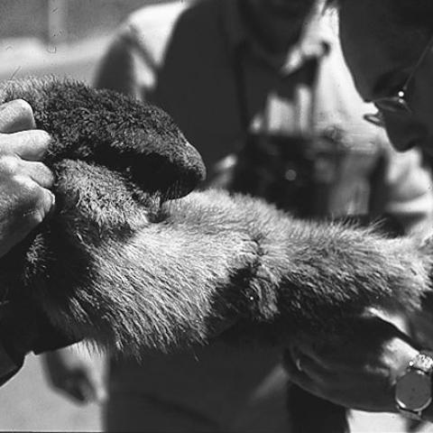 Il ritorno delle marmotte - FFDL