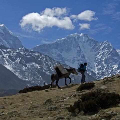 La cheval de l'Everest - FFDL