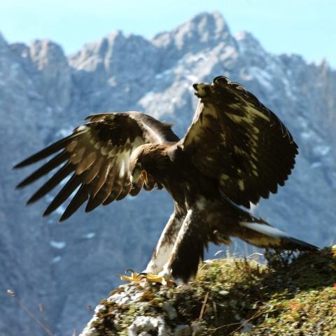 Zwischen Bayern und Tirol - Natur im Karwendel - FFDL