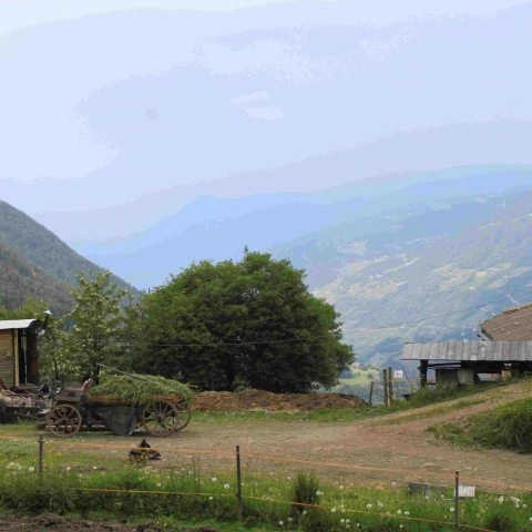 Walden oder leben in den Bergen - FFDL