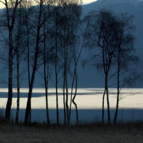 Fjord - FFDL