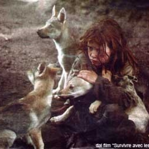 Surviving with wolves - FFDL
