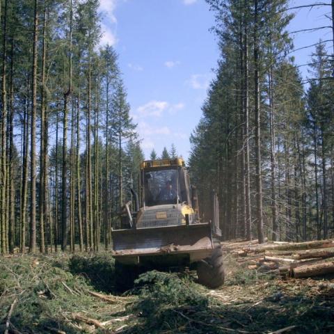 Le temps des forêts - FFDL