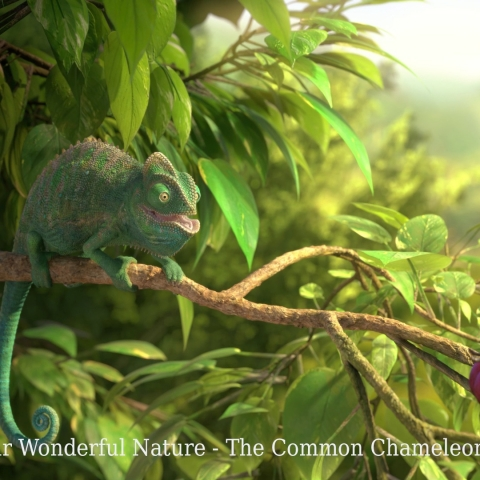 OUR WONDERFUL NATURE - THE COMMON CHAMELEON - FFDL